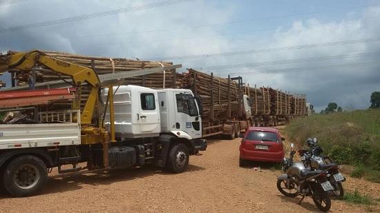 Caminhões carregados de eucalipto foram apreendidos pelos Gavião. Madeira está distribuída abaixo da linha de transmissão.