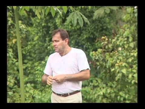 Jorge Bichara abre portas da FZM para se transformar em set de filme cotado a muitos prêmios internacionais. O pouco que resta da floresta de Marabá, preservada para o mundo ver.