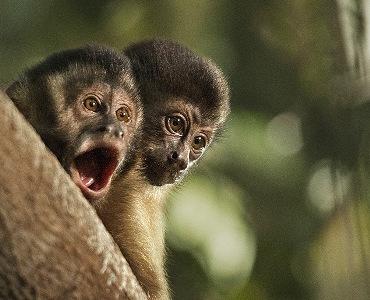 Macaco filme