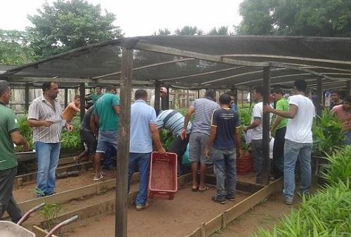 Agricultores de São Domingos do Araguaia são contemplados com 11 mil mudas de açaí
