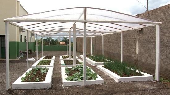 Horta da nova escola produzindo verduras para merenda escolar.