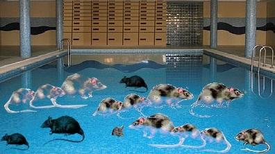 parauapebas a tua piscina t cheia de ratos hiroshi On a tua piscina ta cheia de ratos