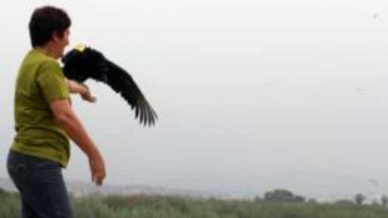 Após instalação do equipamento, aves foram libertadas